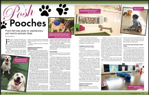 Pet resorts - Scottsdale Airpark News